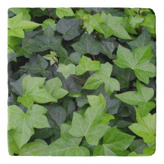 Green Ivy Botanical Print Trivet