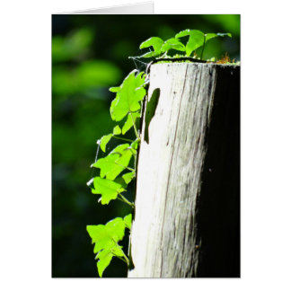 Green ivy leaves at a tree trunk card