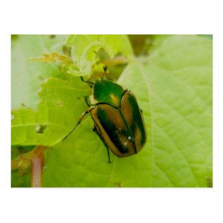 Green June Beetle Postcard