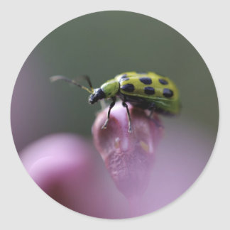 Green Ladybug on Pink Flower Stickers