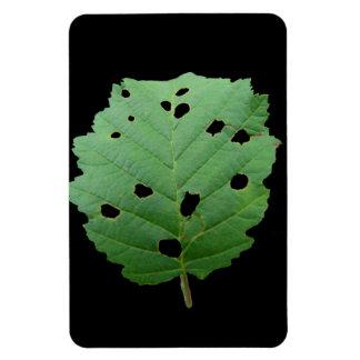 Green Leaf Black Background Flexible Magnet