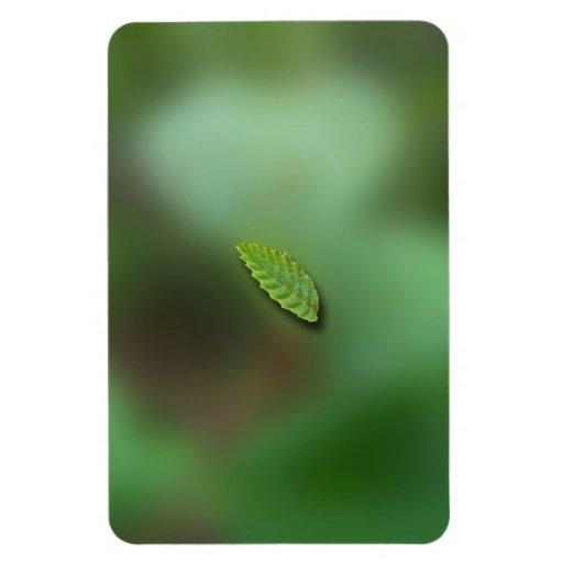 Green Leaf Blurred Background; No Greeting Vinyl Magnet