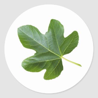 Green leaf closeup isolated on white background classic round sticker