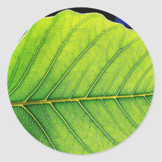 Green Leaf Leaves Classic Round Sticker