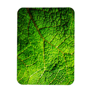 Green Leaf Macro Rectangular Photo Magnet