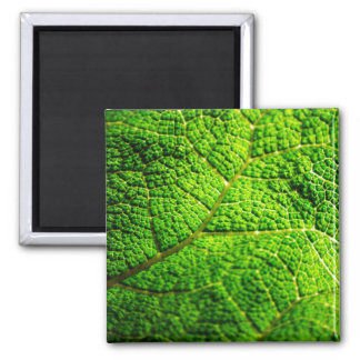 Green Leaf Macro Square Magnet