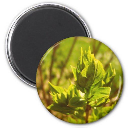 Green Leaf Fridge Magnet