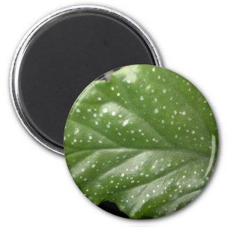 Greenleaf Magnets