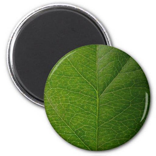 Green Leaf Fridge Magnets