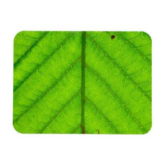 Green Leaf Magnet Vinyl Magnets