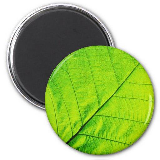 Green Leaf Magnets