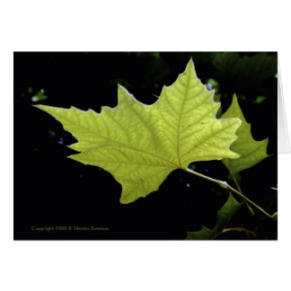 Green Leaf Note Cards