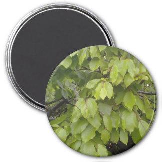 green leaf plant 3 inch round magnet