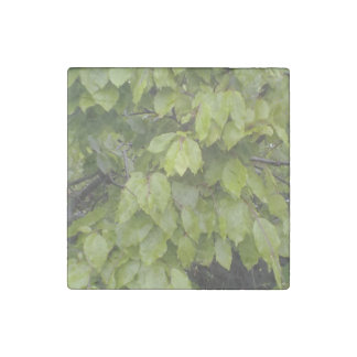 green leaf plant stone magnet