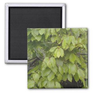 green leaf plant fridge magnet