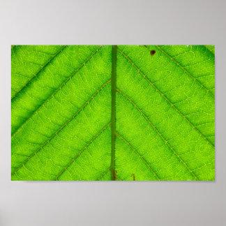 Green Leaf Poster Print
