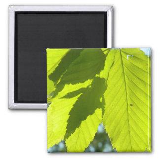 Green Leaf Shadows Square Magnet
