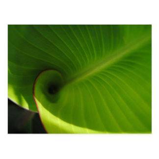 Green Leaf Swirl Postcard