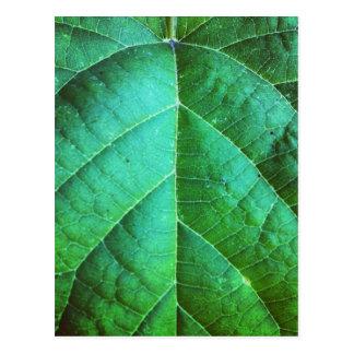 Green Leaf Texture Postcard