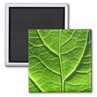Green leaf texture square magnet