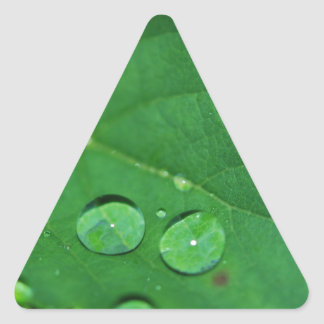 Green Leaf with Waterdrops Sticker