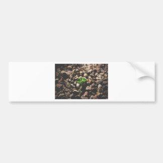 Green Leafy Plant Starting to Grow on Beige Racks Bumper Sticker