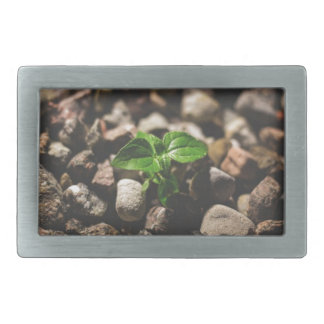 Green Leafy Plant Starting to Grow on Beige Racks Rectangular Belt Buckles