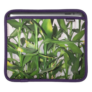 Green leaves and bamboo shoots house plant iPad sleeve