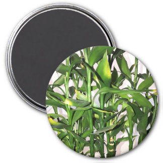 Green leaves and bamboo shoots house plant magnet