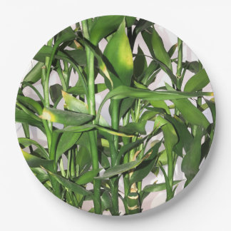 Green leaves and bamboo shoots house plant paper plate