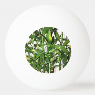 Green leaves and bamboo shoots house plant ping pong ball