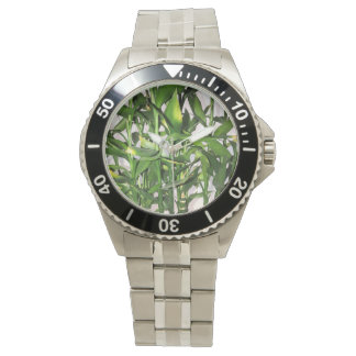 Green leaves and bamboo shoots house plant watch