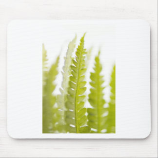 Green Leaves, Green Plant, Plants, Earth Mouse Pad
