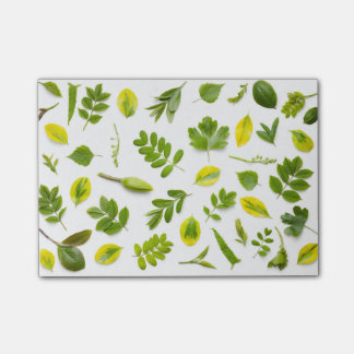 Green Leaves Isolated on White Background Post-it Notes