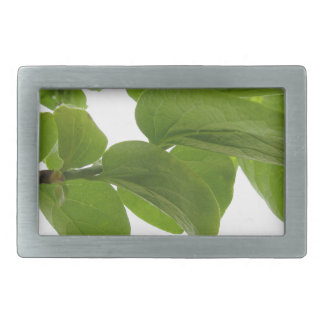 Green leaves of persimmon tree on white background belt buckle