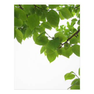 Green leaves of persimmon tree on white background letterhead