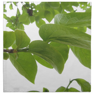 Green leaves of persimmon tree on white background napkin