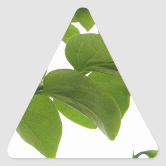 Green leaves of persimmon tree on white background triangle sticker