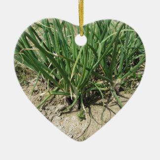 Green leek plants growing in the garden ceramic heart ornament