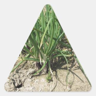Green leek plants growing in the garden triangle sticker