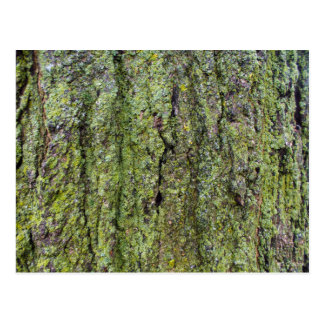 Green Lichen on Tree Bark Postcard