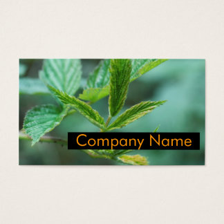 Green Lifestyle Business Card
