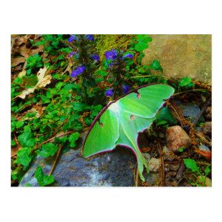 Green Luna moth Postcard