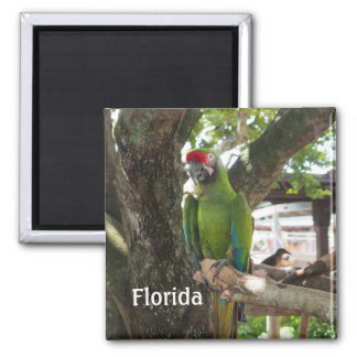 green macaw or parrot square magnet