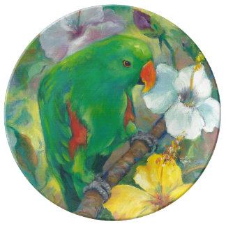 Green male Eclectus parrot Porcelain Plates