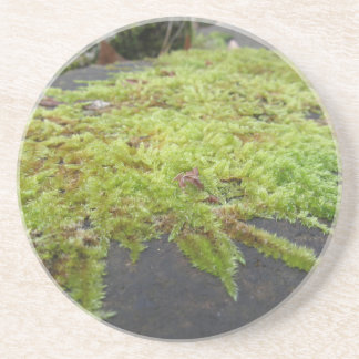 Green moss in nature Detail of moss covered stone Coaster