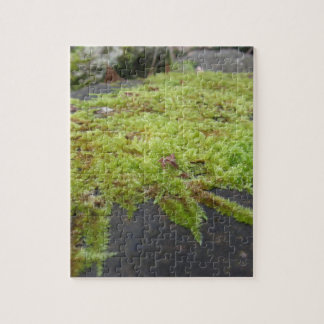 Green moss in nature Detail of moss covered stone Jigsaw Puzzle