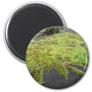 Green moss in nature Detail of moss covered stone Magnet