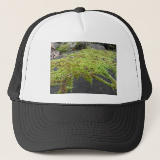 Green moss in nature Detail of moss covered stone Trucker Hat