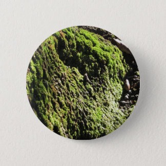 Green moss in nature  Detail of moss covered trunk 2 Inch Round Button